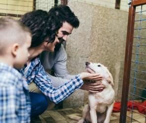 North Carolina Animal Shelter And Pet Rescue Insurance