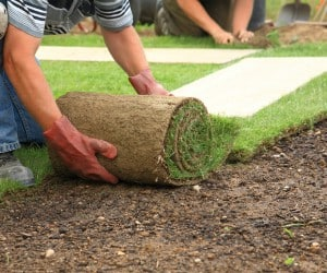 Landscaper Laying Sod