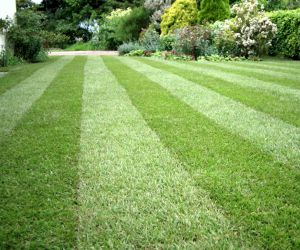 KY Lawn Care Insurance