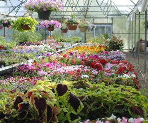 MI Nursery And Greenhouse Insurance