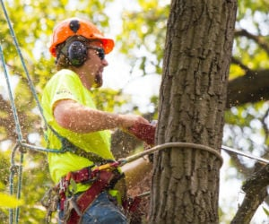 NC Tree Trimming Insurance