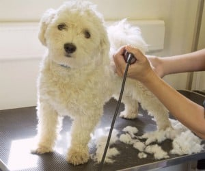 VA Pet Groomer Insurance