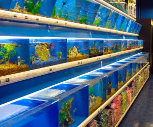MD Pet Store Insurance