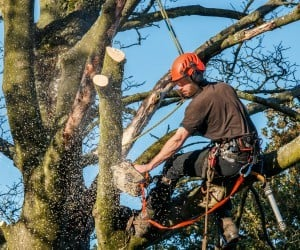 CO Tree Surgeon Insurance