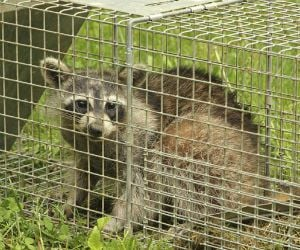 Wildlife & Pest Control Insurance Florida - Cost & Coverage